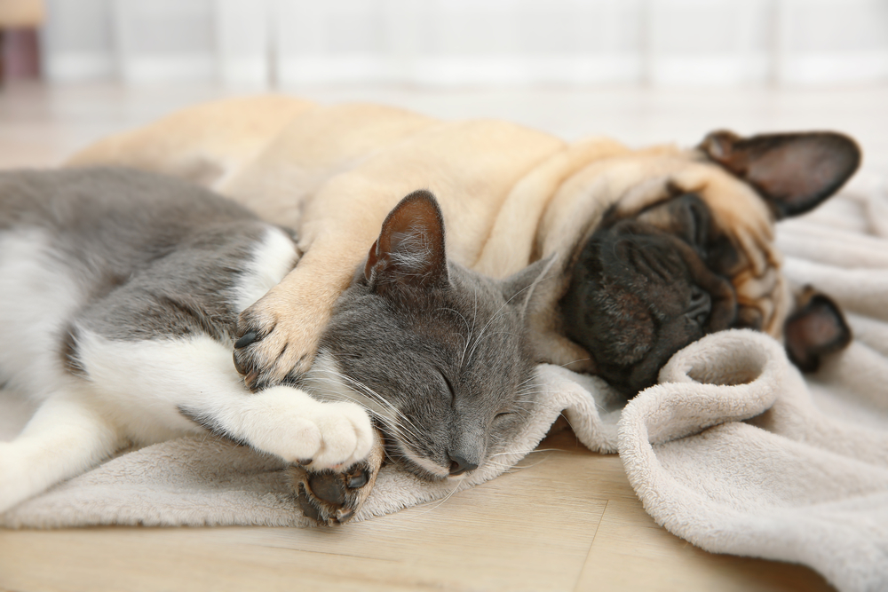 dogs sleeping with cats